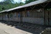 Miris, Bangunan Sekolah Ini Mirip Kandang Ayam