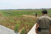 DPMPTSP KarawangHentikan Pembangunan Kandang Ayam Tak Berizin